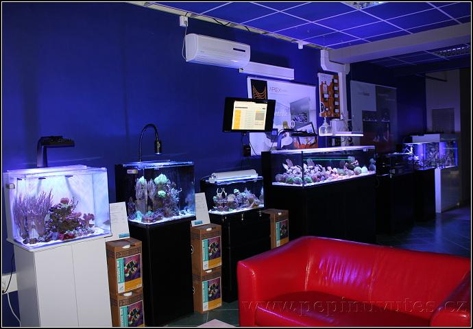 Výstavní mořská akvária