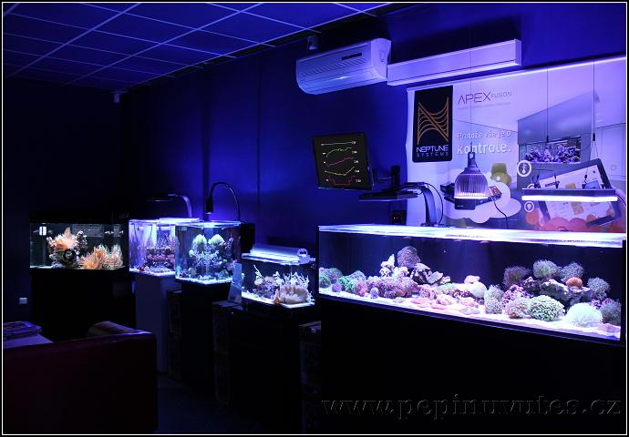 Výstavní akvária