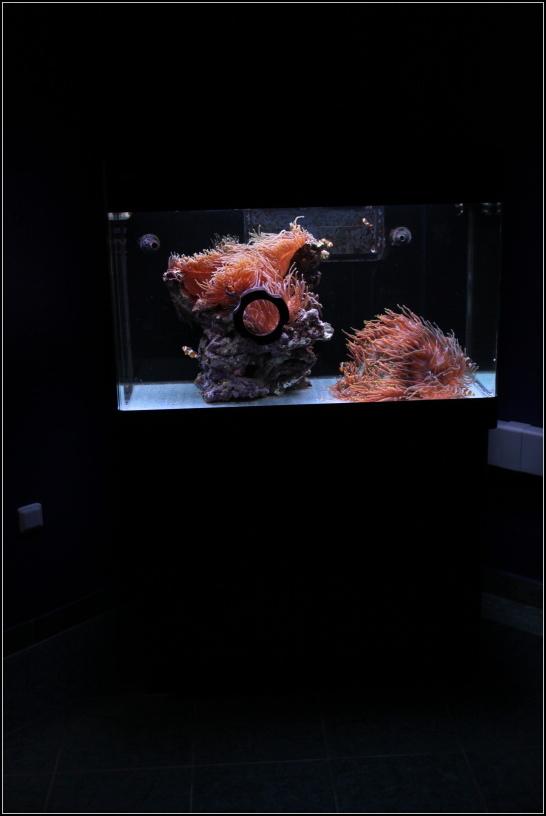 Mořské akvárium Red Sea max 250