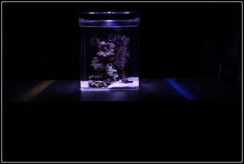 Nano mořské akvárium