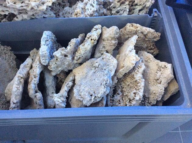 Kámen korálové pláty - 1
