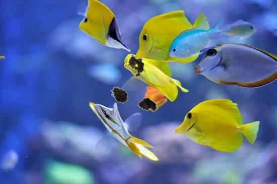 Masstick kompletní výživa pro ryby a bezobratlé 14 g - 2