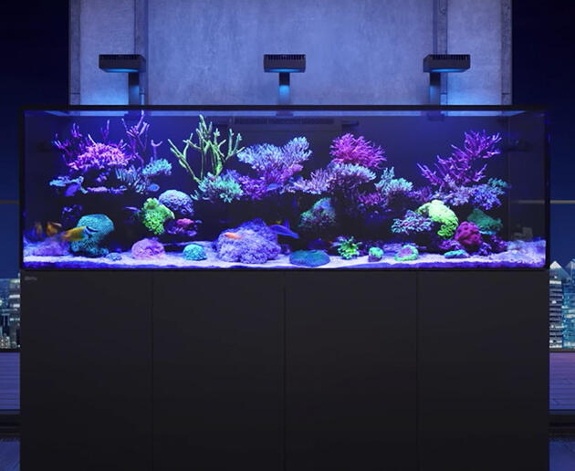 Red Sea Reefer-S 1000 černá - 2