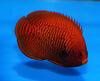 Nejnovější import ryb,bezobratlých 11.srpna 2020