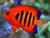 Mořské akvárium Pepinův útes - Dvojitý import 31.ledna 2019