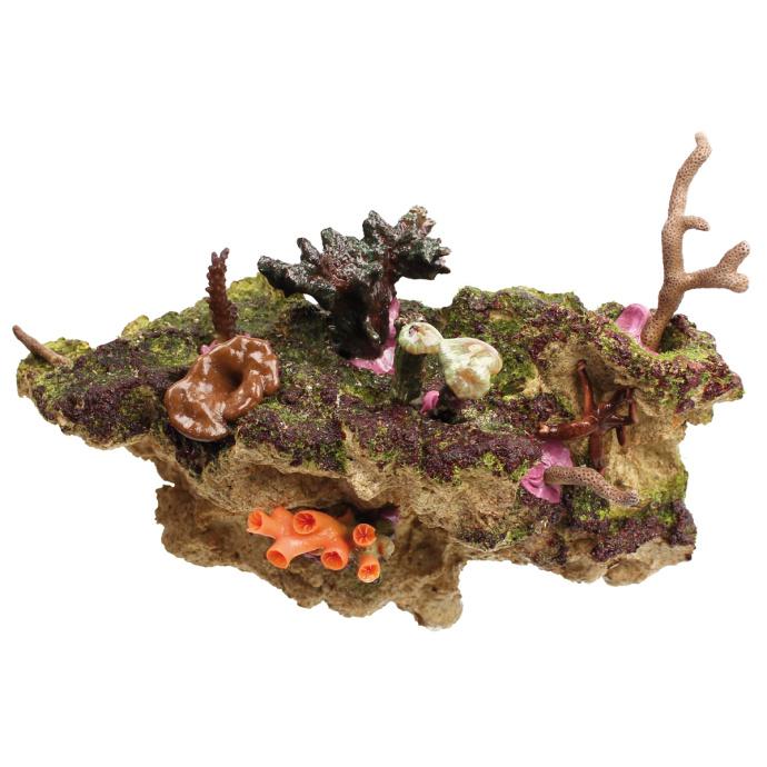 coral rack