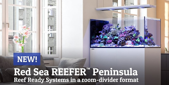 Red Sea reefer peninsula