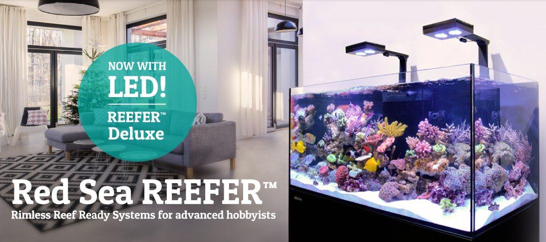 Mořské akvárium Red Sea